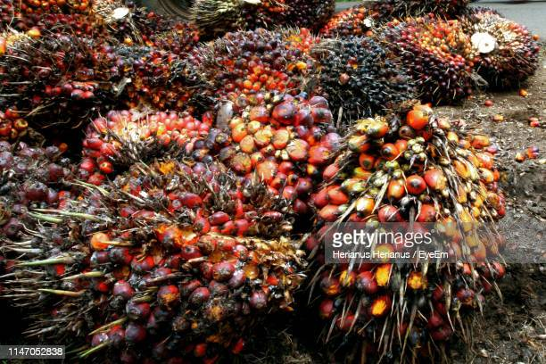 high angle view of palm oil fruits - palm oil stock pictures, royalty-free photos & images
