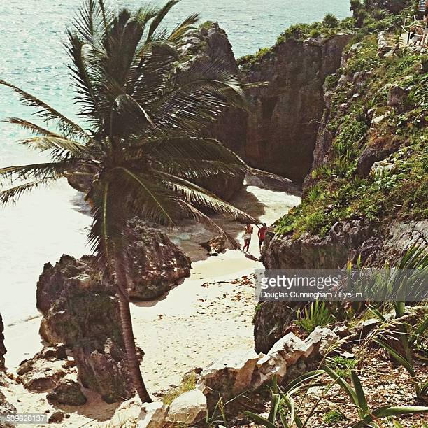 High Angle View Of Palm Tree And Rock Formations On Beach