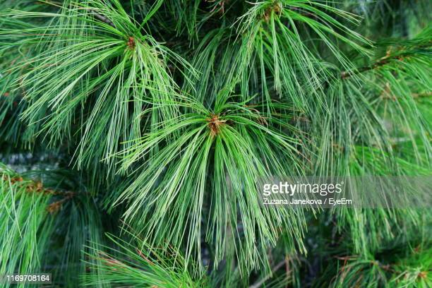 high angle view of palm tree - zuzana janekova stock pictures, royalty-free photos & images