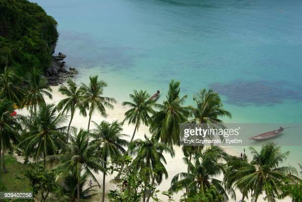 High Angle View Of Palm Trees At Beach Against Sky