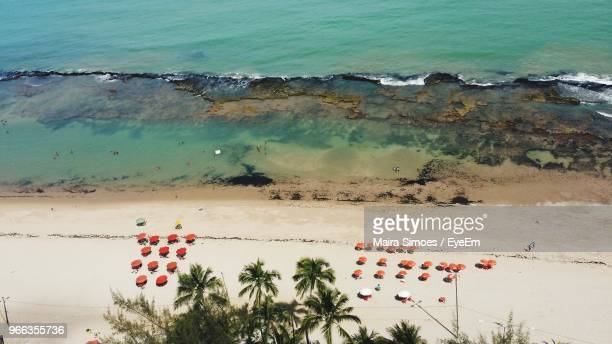 High Angle View Of Palm Trees By Sea