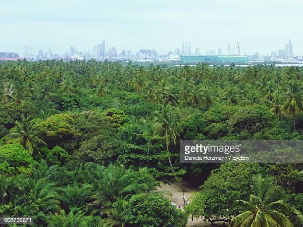 high angle view of palm trees growing in forest - lagos nigeria fotografías e imágenes de stock