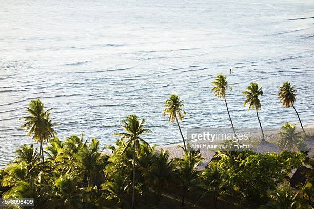 high angle view of palm trees on beach - guam stock pictures, royalty-free photos & images