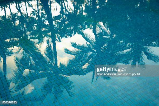 High angle view of palm trees reflecting in swimming pool