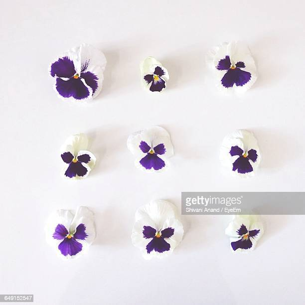 High Angle View Of Pansies On White Background