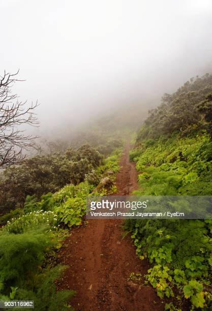 High Angle View Of Pathway In Forest During Foggy Weather
