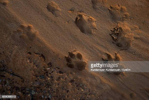 High Angle View Of Paw Print On Sand At Beach