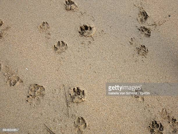 High Angle View Of Paw Prints On Beach