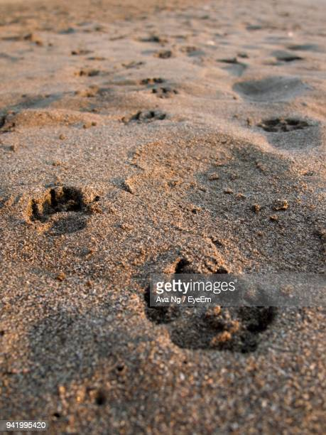 High Angle View Of Paw Prints On Sand At Beach