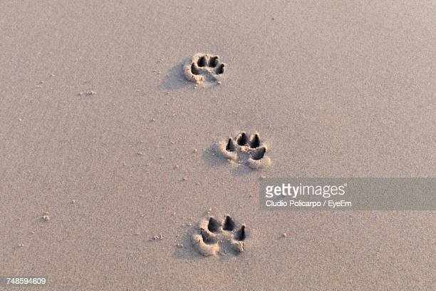 High Angle View Of Paw Prints On Sand