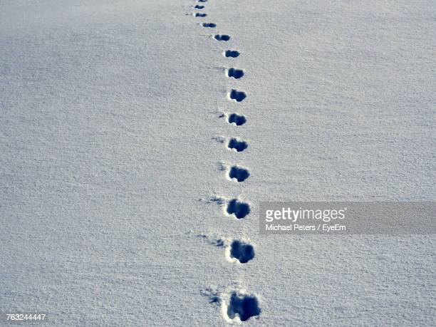 High Angle View Of Paw Prints On Snow