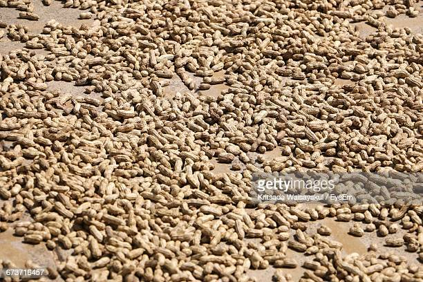 High Angle View Of Peanuts On Field