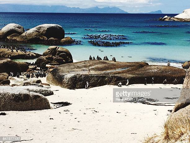 high angle view of penguins at beach - constantia stock pictures, royalty-free photos & images