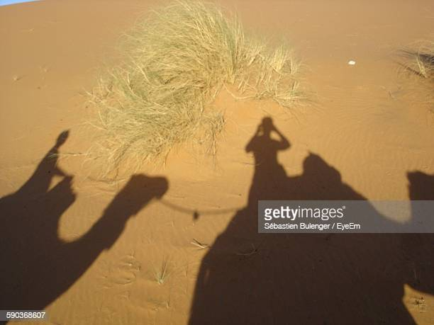 High Angle View Of People And Camels Shadow On Sand In Desert