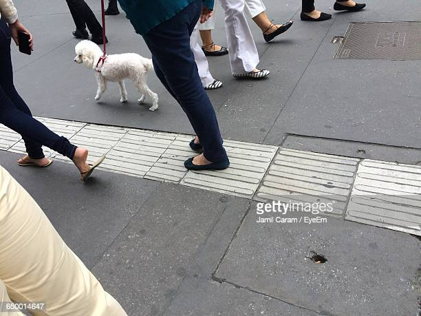 High Angle View Of People And Dog Walking On Footpath