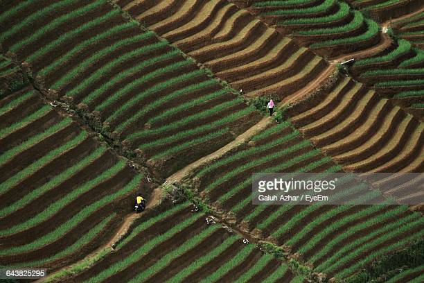 High Angle View Of People In Field