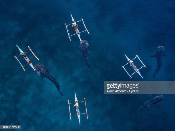 high angle view of people on boats while fish swimming in sea - cebu stock photos and pictures