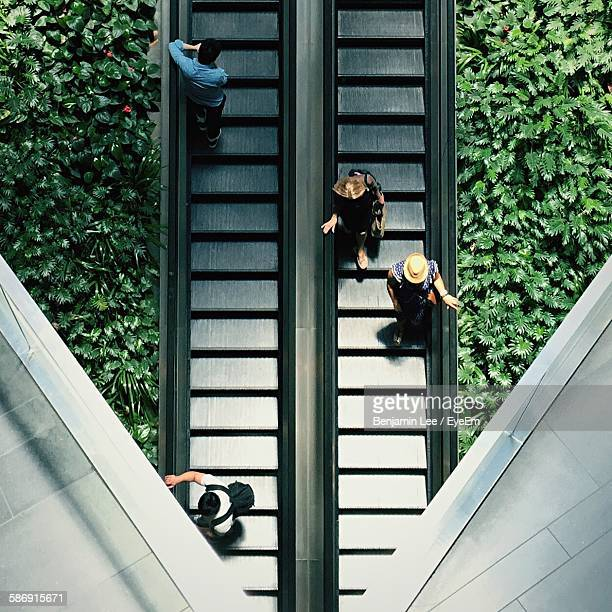 high angle view of people on escalator amidst plants - escalator stock pictures, royalty-free photos & images