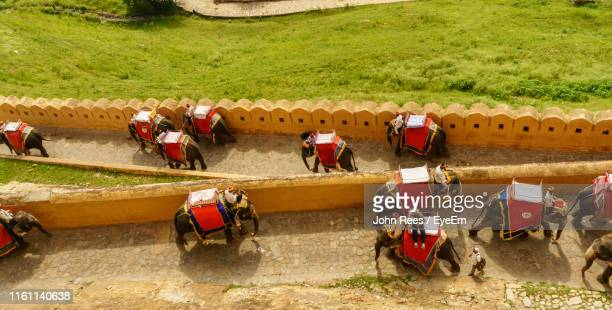 High Angle View Of People Sitting On Elephants