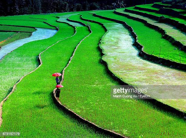 High Angle View Of People Walking At Terraced Rice Field