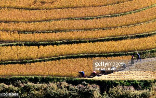 high angle view of people working on agricultural field - ブータン ストックフォトと画像