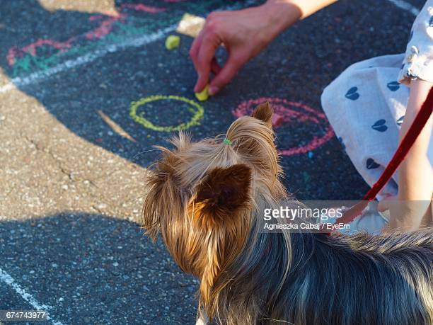 High Angle View Of Person Drawing On Street Using Chalk By Dog