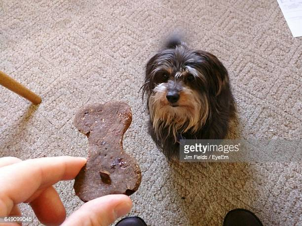 High Angle View Of Person Giving Food To Dog