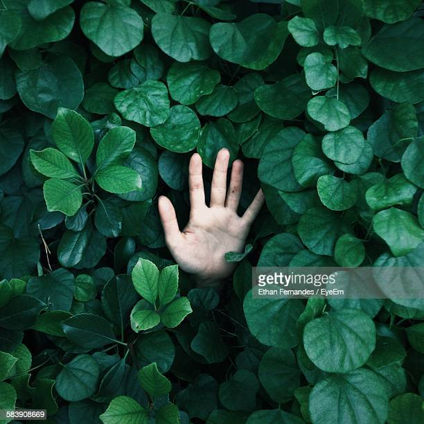High Angle View Of Person Hand Amidst Green Plants