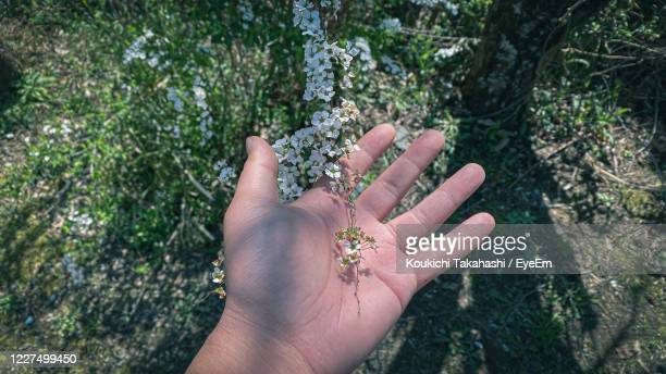 high angle view of person hand on plant against trees - koukichi stock pictures, royalty-free photos & images