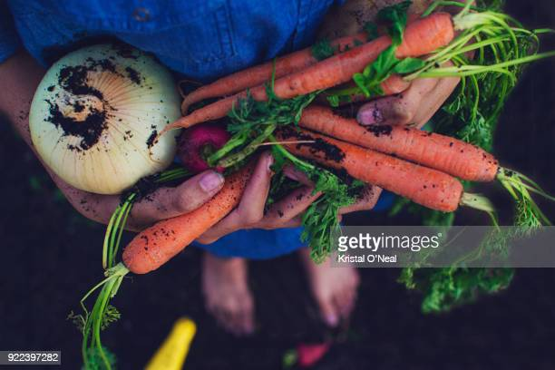 high angle view of person holding fresh organic vegetables - dirty feet stock pictures, royalty-free photos & images
