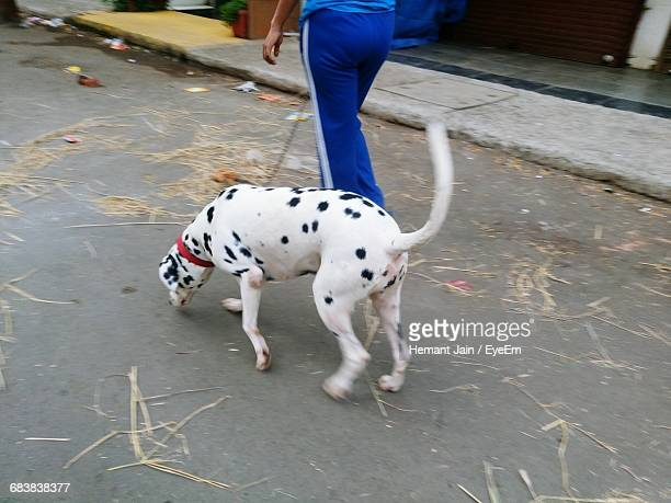 High Angle View Of Person Walking With Dalmatian On Street