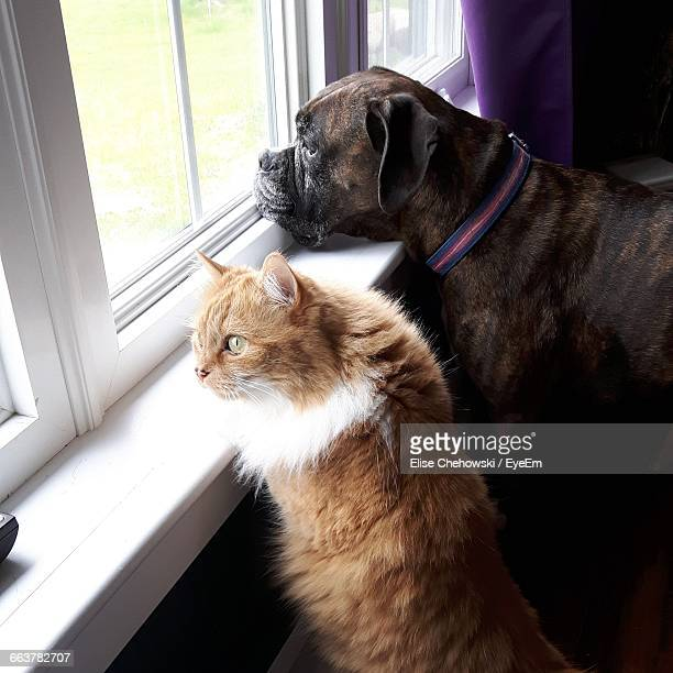 High Angle View Of Pets Looking Through Window At Home