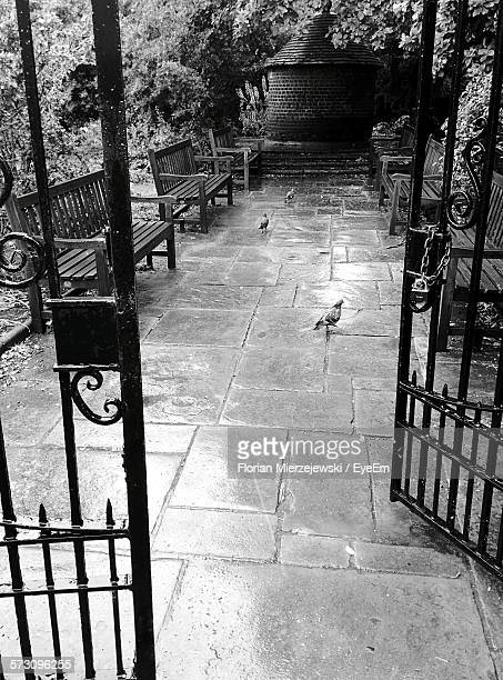 High Angle View Of Pigeons On Pathway Amidst Benches Seen Through Gate