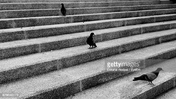 High Angle View Of Pigeons On Steps