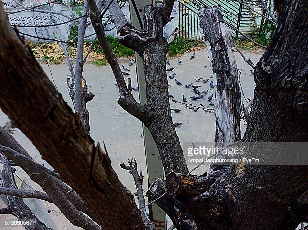 High Angle View Of Pigeons On Street Seen Though Tree Branch