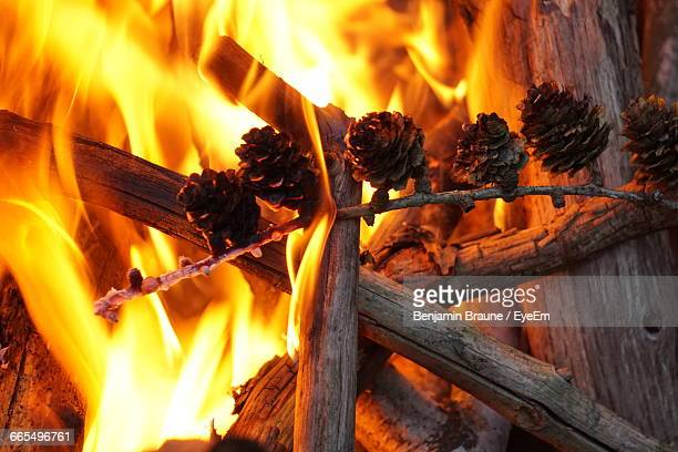 High Angle View Of Pine Cones On Firewood