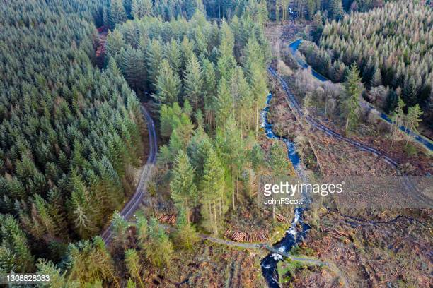high angle view of pine forest in scotland - johnfscott stock pictures, royalty-free photos & images