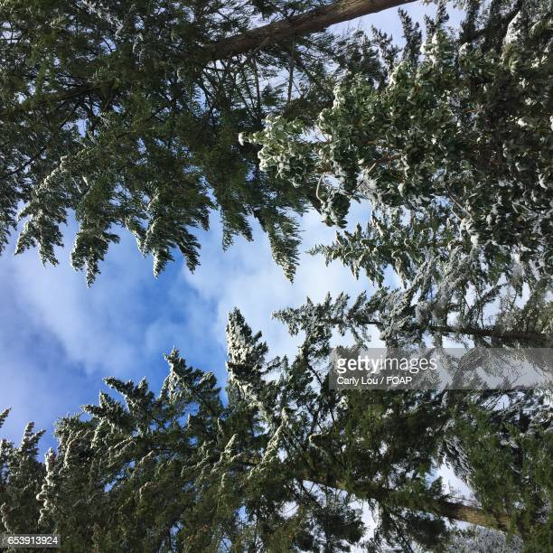High angle view of pine tree against sky