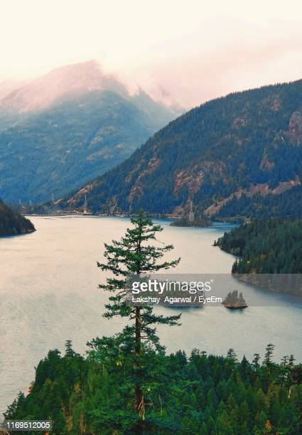 high angle view of pine trees by lake against sky - diablo lake stock photos and pictures