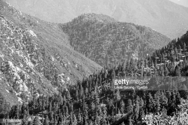 high angle view of pine trees on mountain - big bear lake stock pictures, royalty-free photos & images