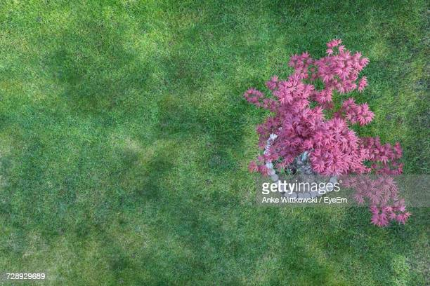 High Angle View Of Pink Flower On Field