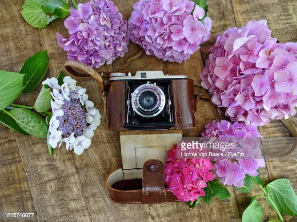 high angle view of pink flowers on table and an retro camera - hannie van baarle stockfoto's en -beelden