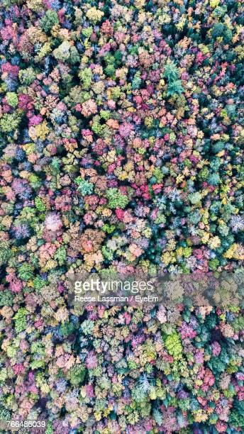 High Angle View Of Pink Flowers