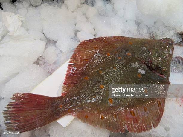 High Angle View Of Plaice On Ice At Fish Market