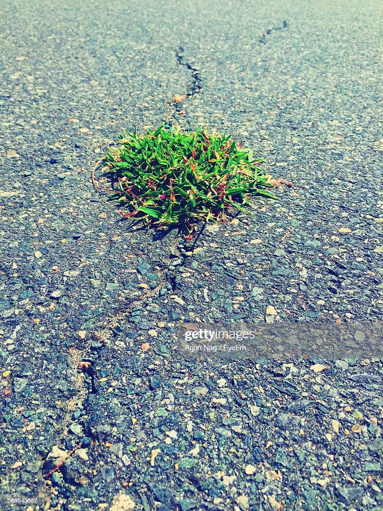 High Angle View Of Plant Growing Amidst Road : Stock Photo