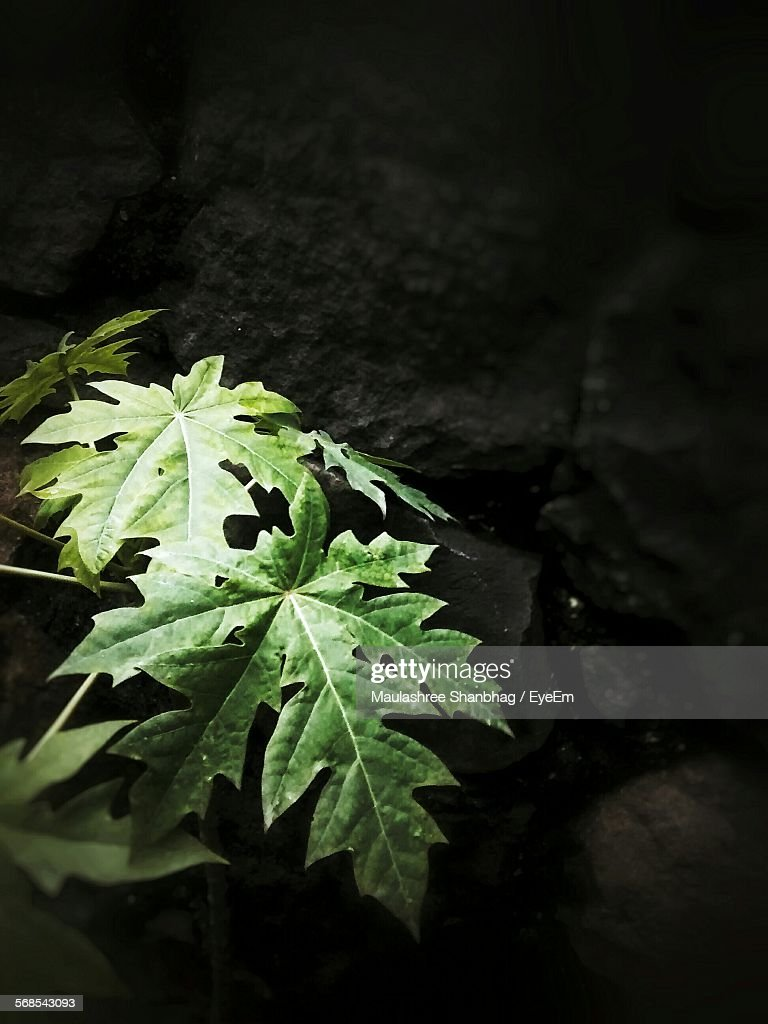 High Angle View Of Plant Growing On Field At Night : Stock Photo