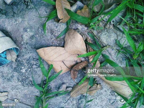High Angle View Of Plant In Autumn Leaves
