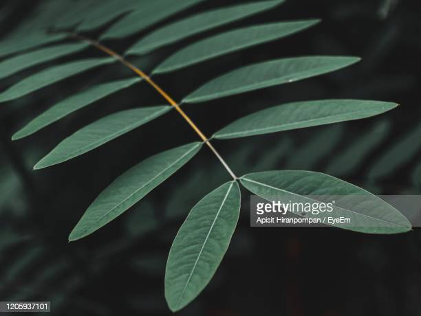 high angle view of plant leaves - apisit hiranpornpan stock pictures, royalty-free photos & images