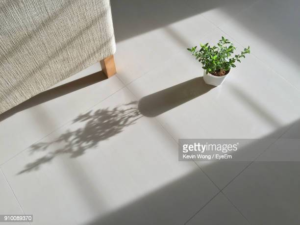 High Angle View Of Plant On Floor