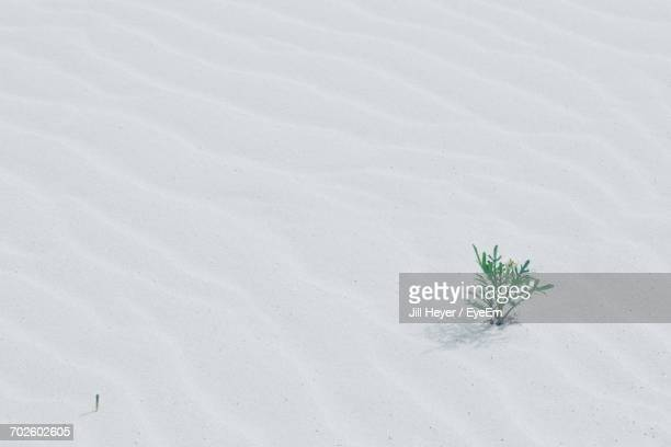 High Angle View Of Plant On White Sand